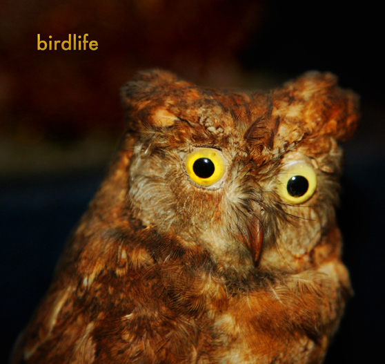 birdlife cover