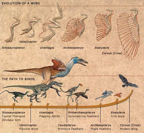 [Image: bird_evol.jpg]