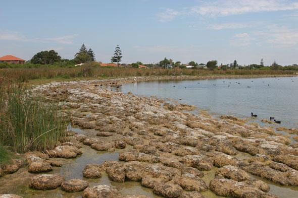 Lake Richmond microbialites