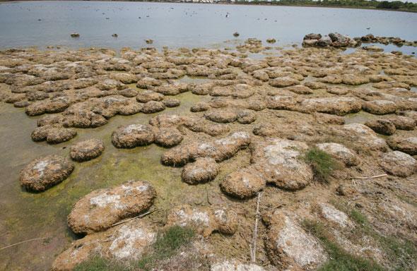 Lake Richmond microbial mounds