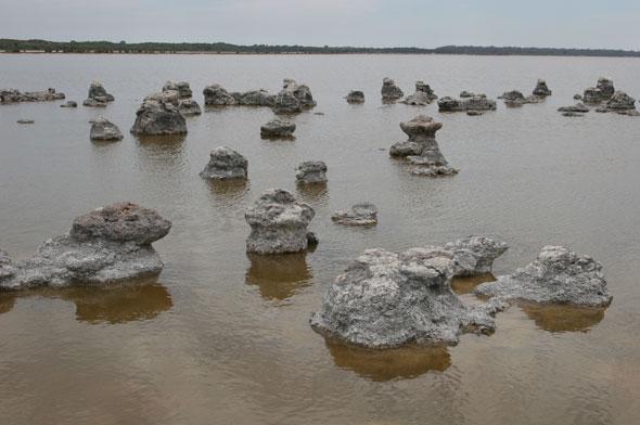 Lake Walyungup sculpture field