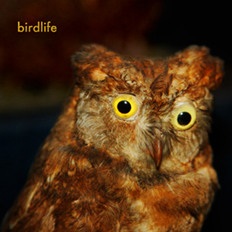 birdlife, with Nyanda Smith, Nandi Chinna, Michael Farrell and Graeme Miles