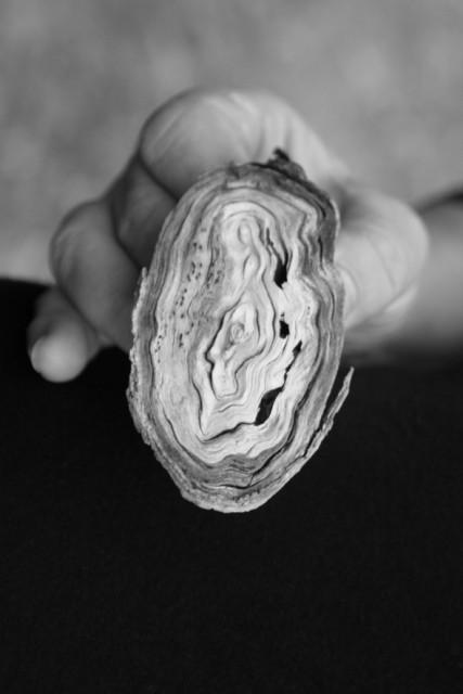 fungal blob