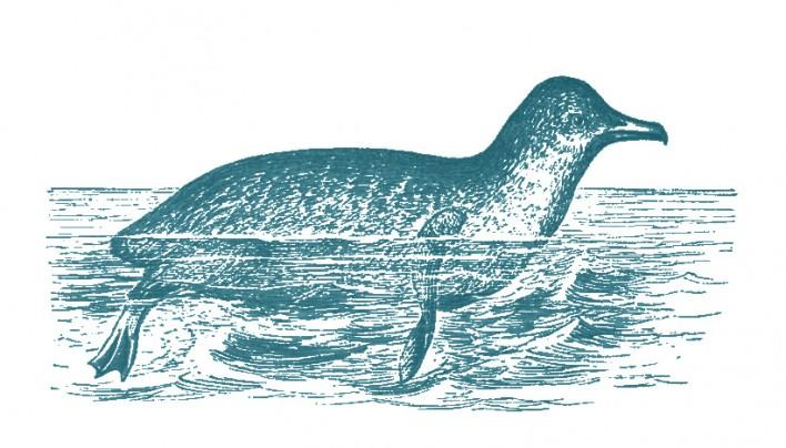 cyano penguin