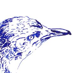 Little Penguin for .–. / .- / .- project