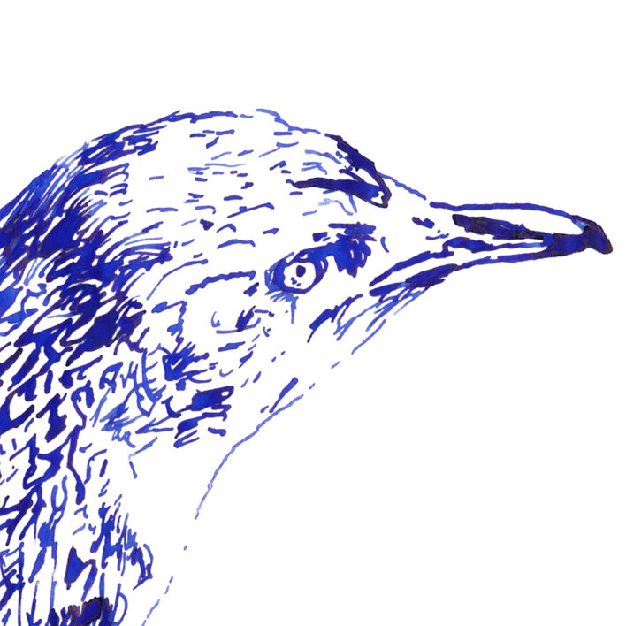 sketch of penguin in blue ink