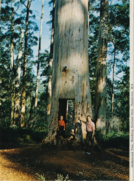Kingdom of the Karri (Please don't tuck me in until I'm yours) Underwood Tree
