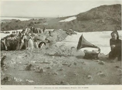 Penguins listening to the Gramophone during the summer