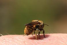 greeting bees