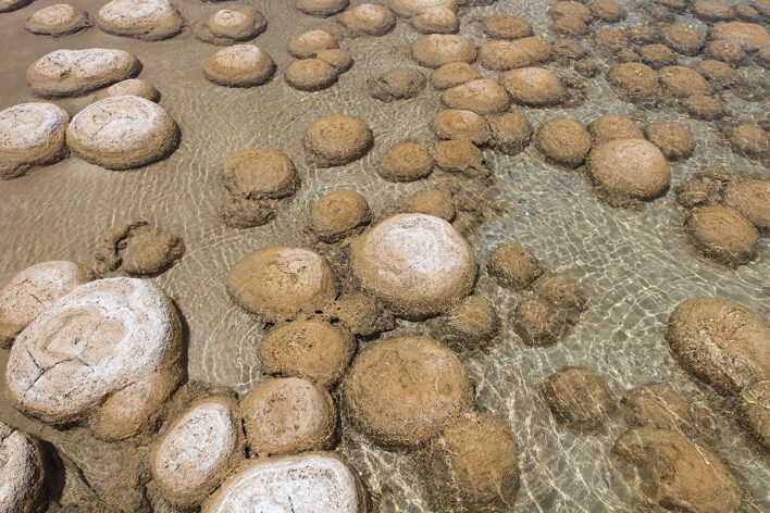 a field of brownish ovoid shapes half covered in water
