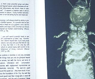 termite text