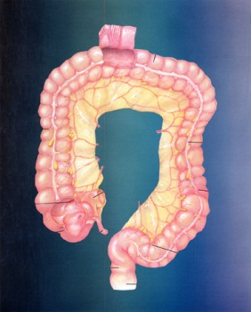 internal world intestines