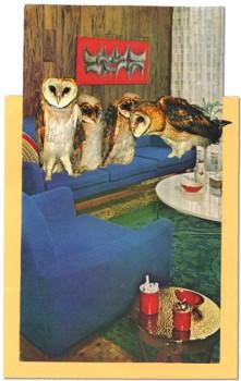 owls and sofa