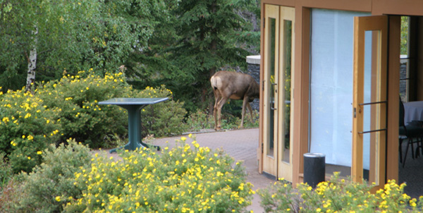 After 6 weeks someone tells me its not an elk and you don't have to run away from it