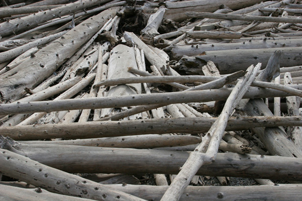 driftwood Moraine Lake