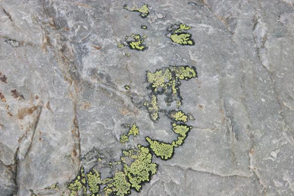 lichen sprawl