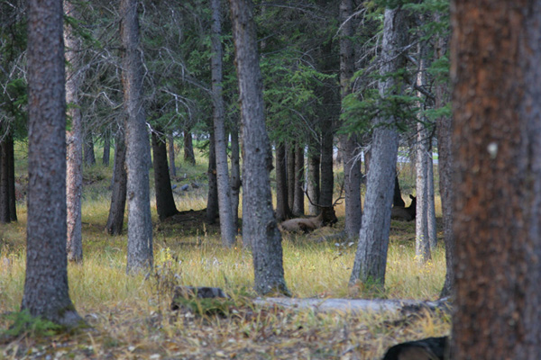 these really are elk