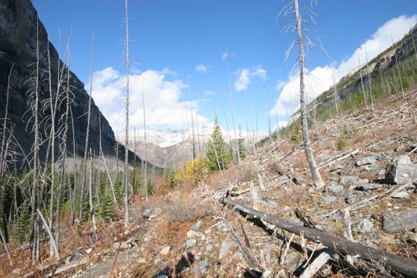 Stanley Glacier debris flow