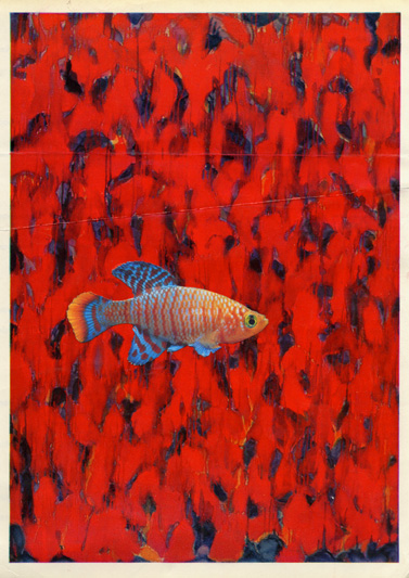 Abstract expressionist fish